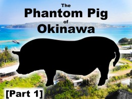 Chasing the Phantom Pig of Okinawa: Part 1