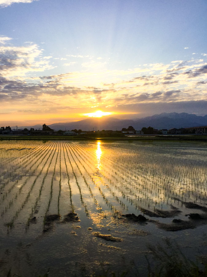Sunrise Tateyama Kurobe Alpine Route rice paddies