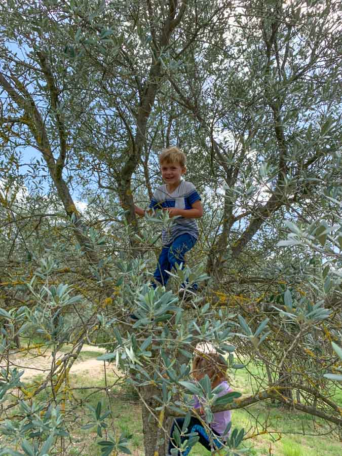 Kids climbing in a tree