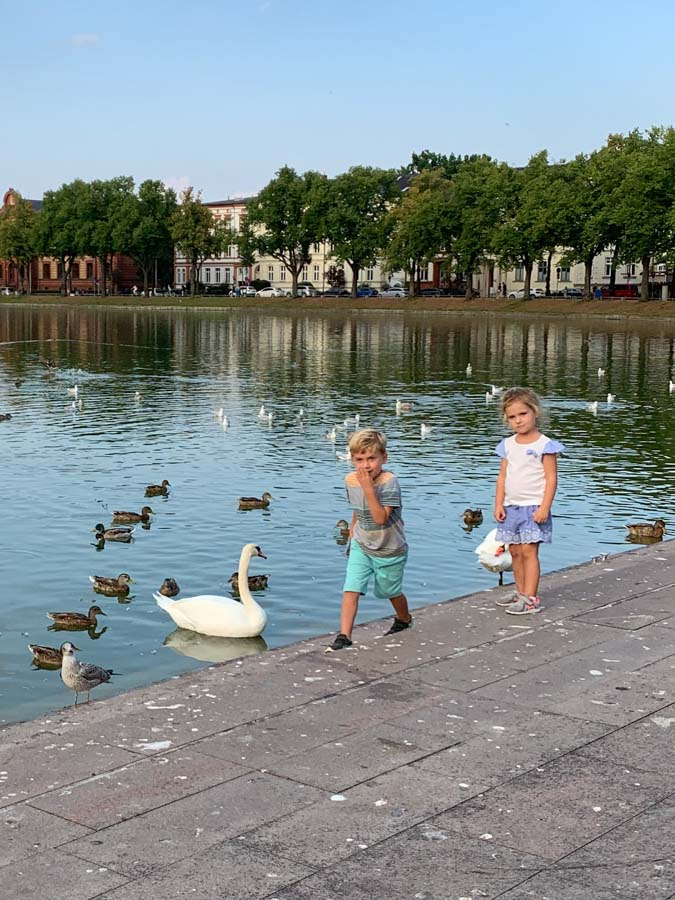 Kids playing with ducks