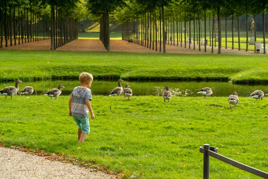 boy walking with ducks