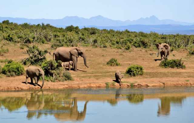 elephant-herd-of-elephants-animals-african-bush-elephant-52717