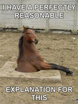 Horse Jokes For Adults : horse, jokes, adults, Horse, Jokes