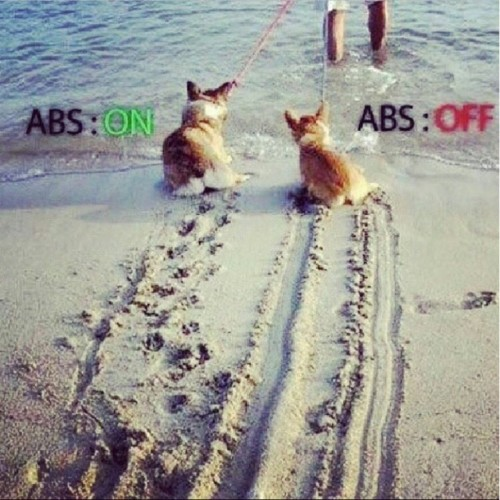 Dog ABS Off ABS On