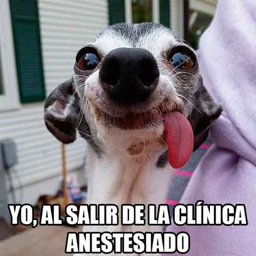 yo-al-salir-de-la-clinica-anestesiado