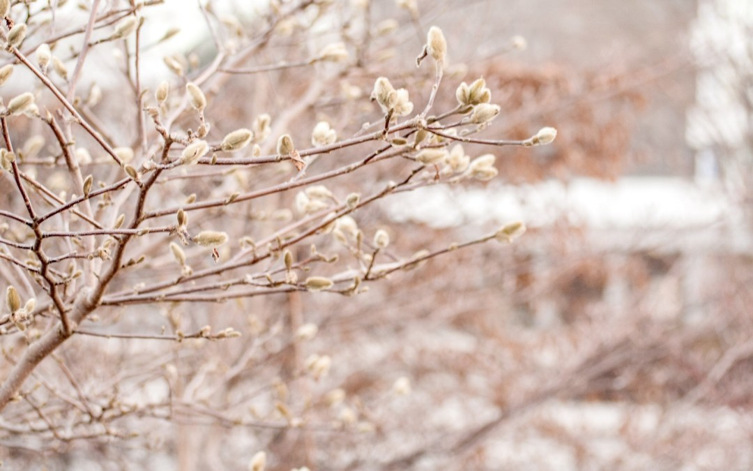 Embrace A Soulful Spring Even When the Cold of Winter Remains