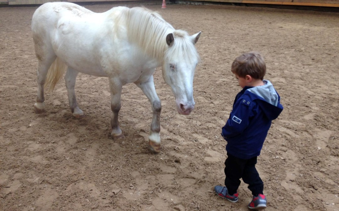 Un cheval et un enfant se regardent