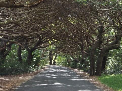 Tree boulevard