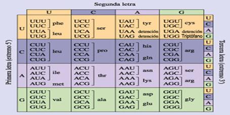 Diccionario del Genoma