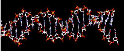 Visualización del ADN