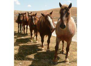 chevaux-bruns-monome