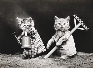 chats-habillés-vieille-photo-incunable