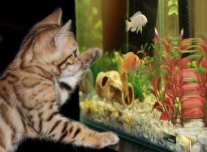 chat-devant-aquarium-allocentrisme