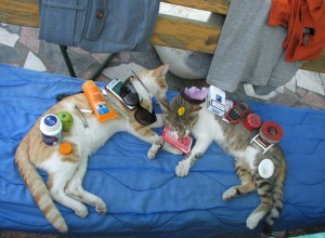 chats-dorment-choses-dessus-obvie