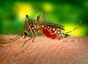 moustique-pique-epistaxis