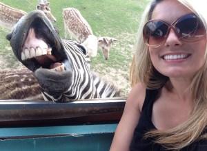 zebre-sourire-grimace-faribole