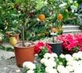 Pécsi virágkiállítás