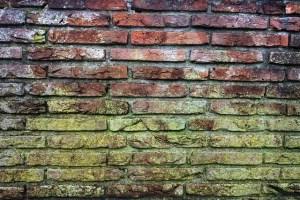 Penészes fal