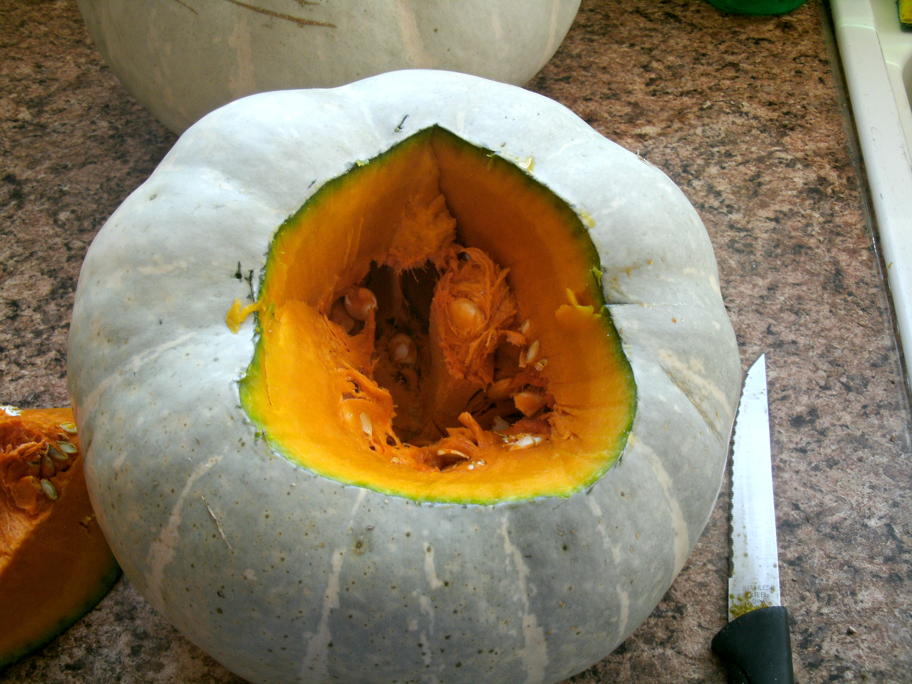 5 Reasons To Plant Silver Moon White Pumpkins In The