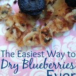 The Easiest Way to Dry Blueberries Ever!