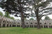 Salisbury Cathedral cloister and cedars