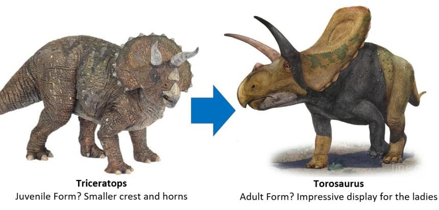 Triceratops to Torosaurus
