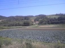 Área agrícola do município de Colombo