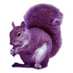 We Are All Purple Squirrels