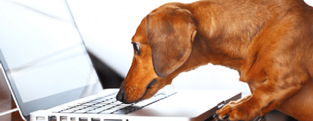 Stop SEO wagging your dog of a website