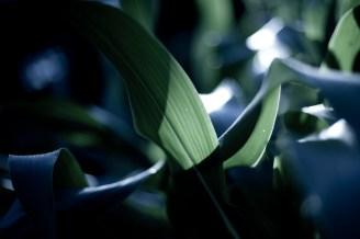 Corn One by St. Louis Photographer Jonathan Gayman