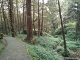 Alishan - mountain trail 5