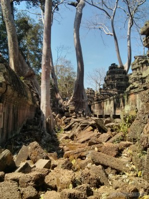 Angkor Archaeological Park - Ta Prohm 11