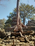 Angkor Archaeological Park - Ta Prohm 17