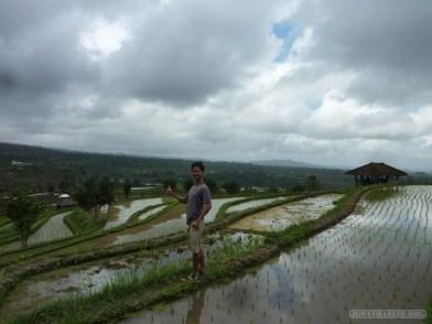 Balinese rice terraces - portrait 2