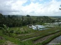 Balinese rice terraces - scenery 10