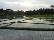 Balinese rice terraces - scenery 2