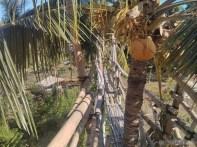 Bohol - Coco farm hostel bamboo skywalk 4