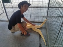 Bohol tour - mini zoo python portrait 1