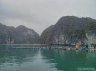 Cat Ba - Halong Bay tour fish farm 1