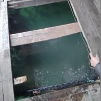 Cat Ba - Halong Bay tour fish farm pet 2