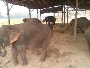 Chiang Mai trekking - elephant camp 3