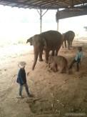 Chiang Mai trekking - elephant camp 5