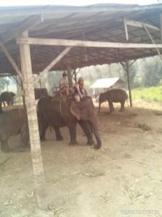 Chiang Mai trekking - elephant camp 6