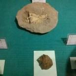 Chiayi - Chiayi museum fossil