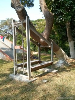 Chiayi - Chiayi park supported tree
