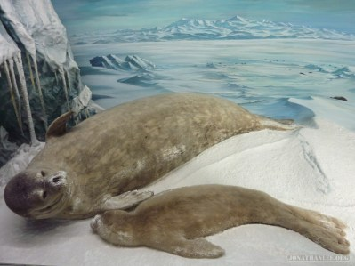 Christchurch - Cantebury museum seals