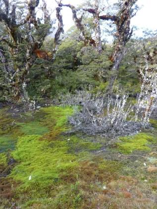 Fiordlands - scenery 8