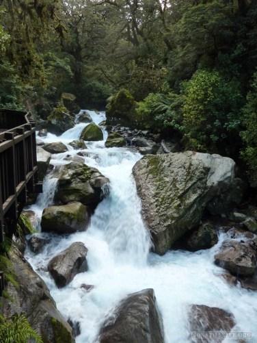 Fiordlands - scenery 9
