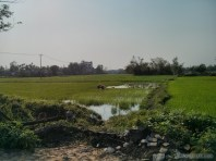 Hoi An - biking rice fields 1