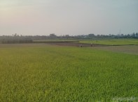 Hoi An - biking rice fields 2
